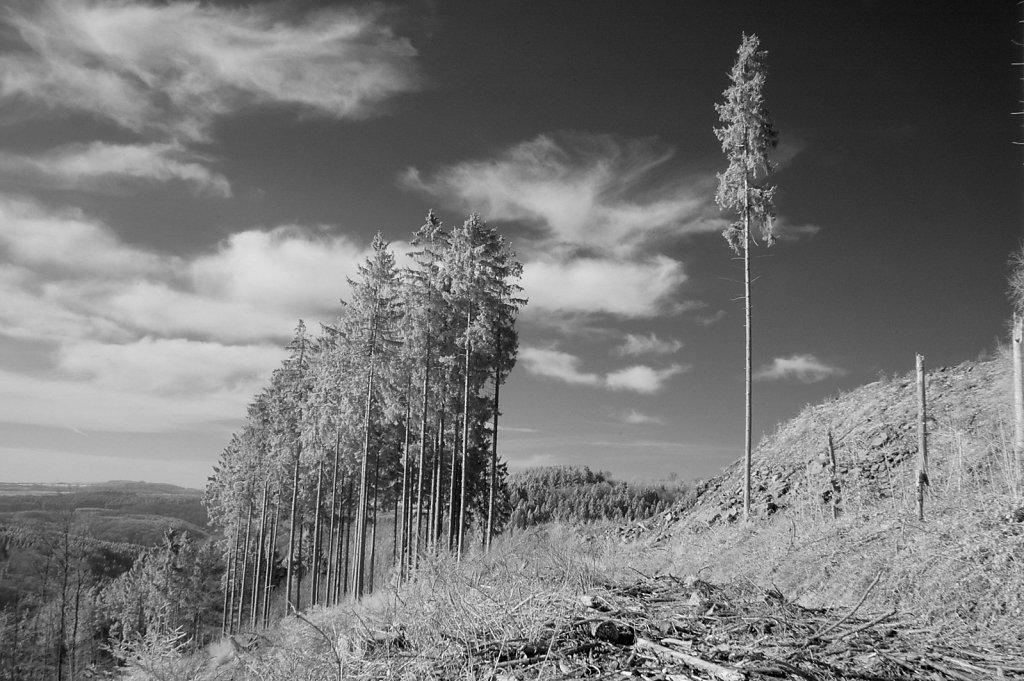 Baumschneise, Nähe Mohrweiler Höhe (Infrarotaufnahme), 15.02.2015