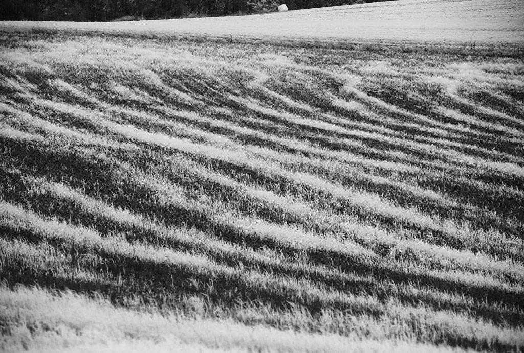 Feld im Hunsrück, nahe Herrstein 2015